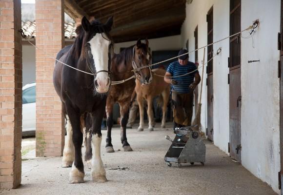 maneggio cavalli lo sperone alcamo
